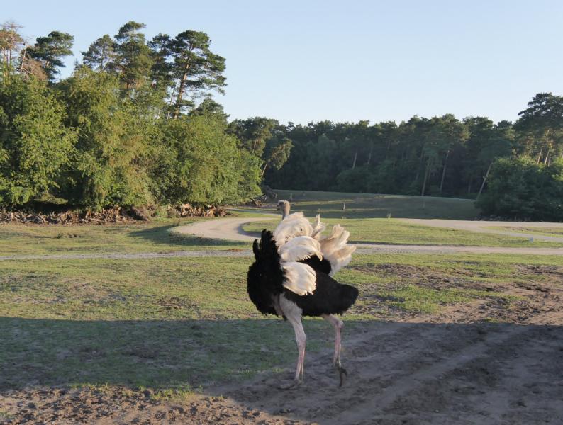 Ночь в Серенгети-Парке и неделя в Национальном парке Шлезвиг-Гольштейнские ватты на Нордзее (Куксхафен, Нойверк), а также Хельголанд и Штаде