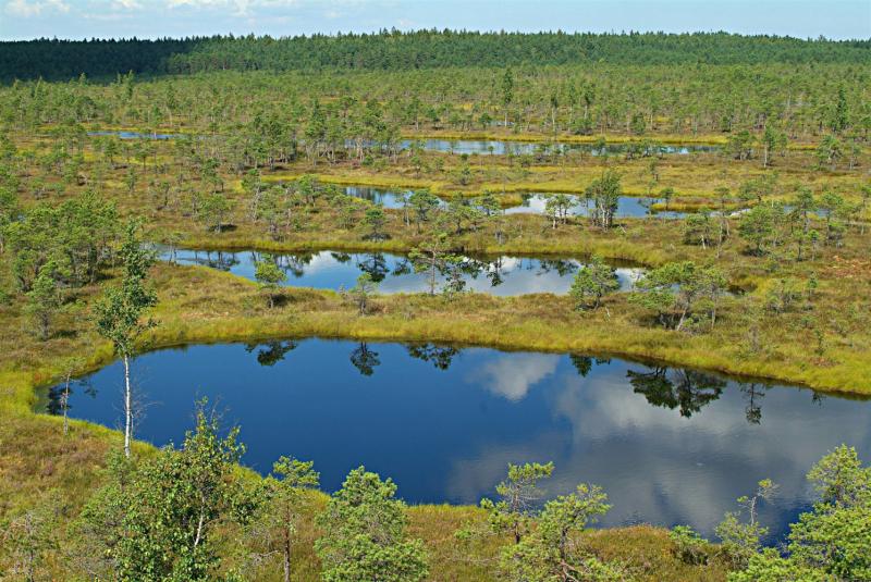 Кемери, Яункемери и Тропа на Кемерских болотах.Август 2020.