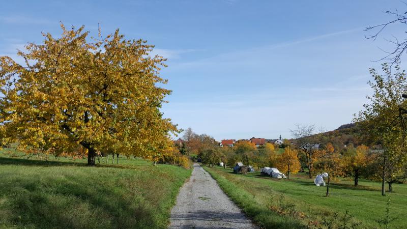 Германия: Дорогу осилит идущий или Пункт отсчёта – 1993
