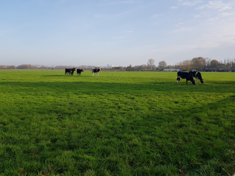 Трое в Амстердаме, не считая собаки. Переезд в Нидерланды.