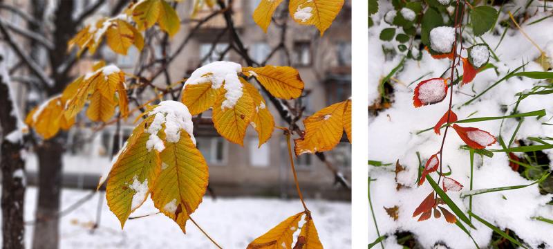 Цветочная терапия в условиях коронавируса или от весны до зимы все сезоны хороши 2020 (Бонн-Брауншвейг-далее везде)