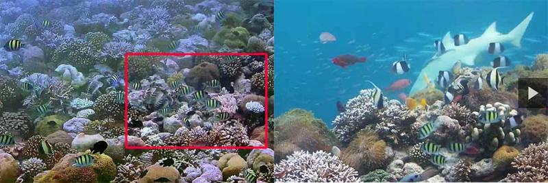 Мальдивы web камеры