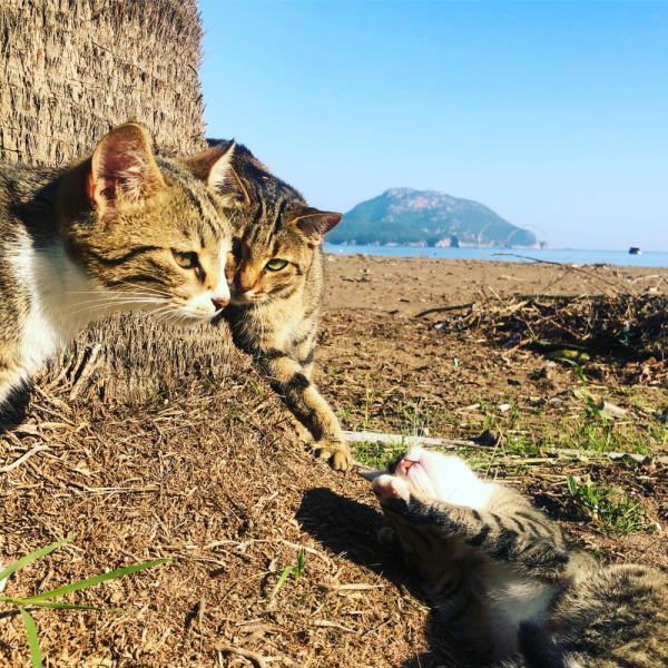Декабрь 2020. Турция отдых больших желудков и ленивых алкоголиков. Много котов