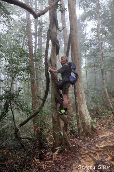 От Гималаев к тропикам (большое азиатское путешествие: Непал–Малайзия–Таиланд, октябрь – январь 2016/7 гг.), часть 2, тропическая