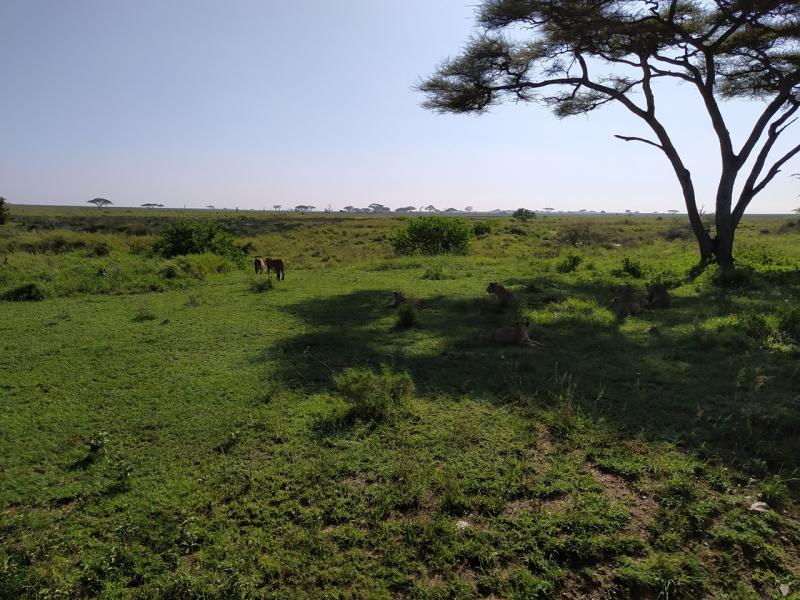 Занзибар Нунгви дек 2020 + сафари Серенгети и Нгоронгоро
