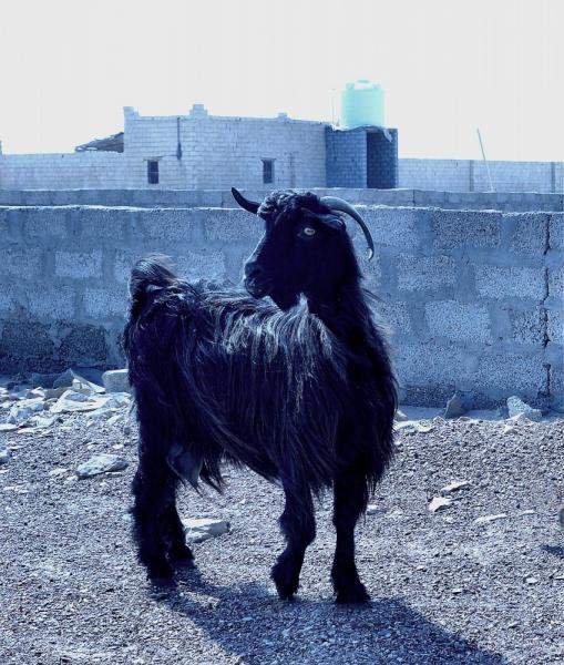 Оман: на 7 дней в султанат.