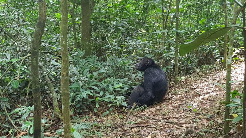 Короновирусная новогодняя Уганда 2021! Self Drive обезьяны!