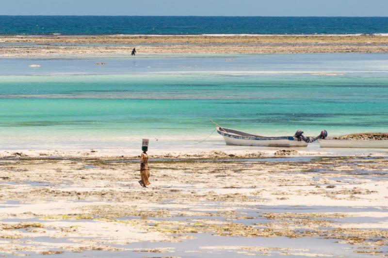 Танзания. Занзибар и Сафари. Фото, видео и впечатления