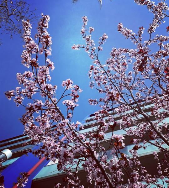 Цветочная терапия в условиях коронавируса или от весны до зимы все сезоны хороши 2020/1 (Бонн-Брауншвейг-далее везде)