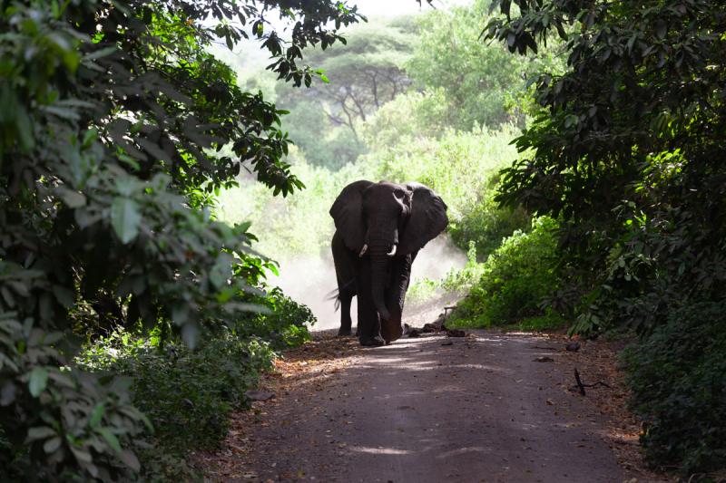 Занзибар и континентальная Танзания (Тарангире, Серенгети, Нгоронгоро и Маньяра) Январь-Февраль 2021