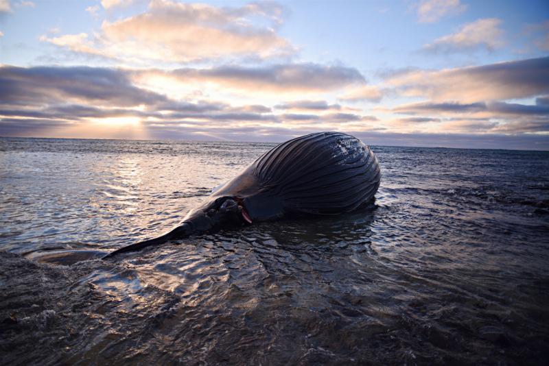 Как я посмотрел на кита. ( Рейкьявик-Сандгерди ).Март 2021 года