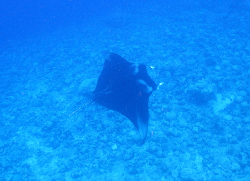 "Остров Тодду: манты, черепахи, планктон и три ""Wow"". ))) Конец марта - начало апреля 2021."