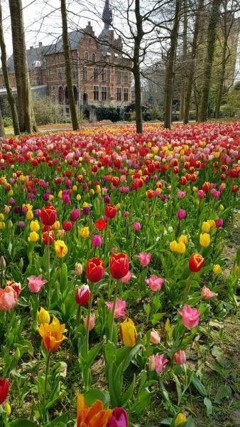 Испытание бельгийской весенней красотой: Floralia+