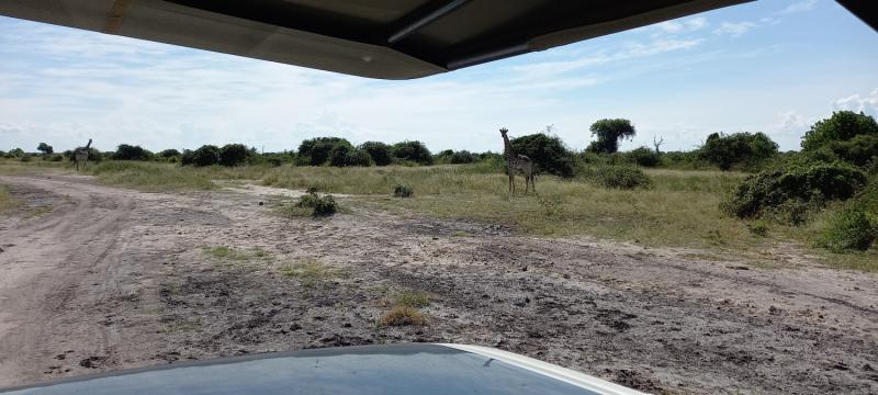 Как вырваться из Африки или fucking coronavirus. Ботсвана, Замбия, Танзания.