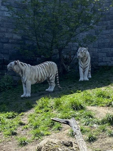 Твердое «НЕТ» разочарованиям: супер-парк Pairi Daiza (Бельгия) в мае 2021г.