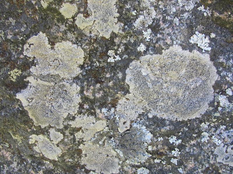 Каменное кольцо Северо-Запада.