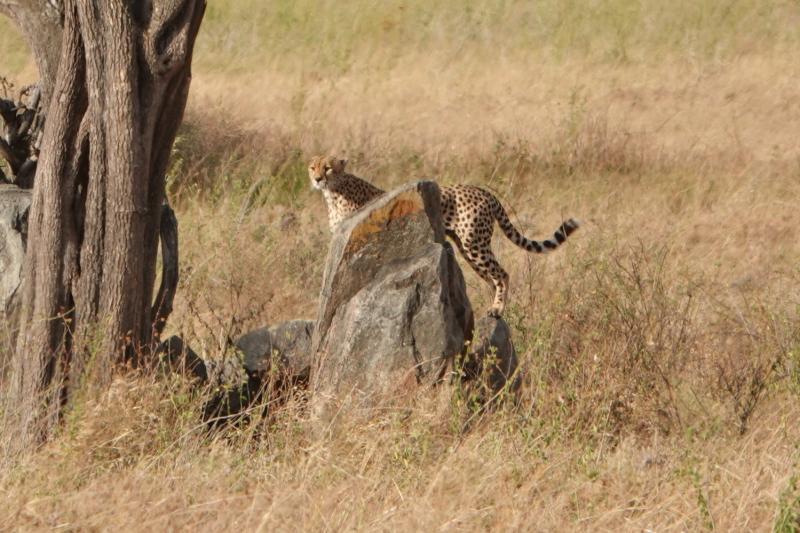 3 недели в Танзании (От Дара до Аруши, день на Килиманджаро, Занзибар) на четверых летом 2021 г.
