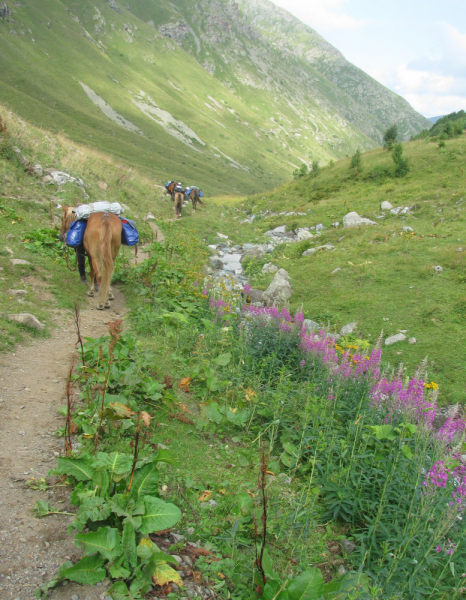 Конный поход к высокогорному озеру Кяфар. Карачаево-Черкессия, август  2021