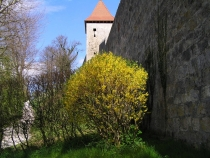 Planting burghausen