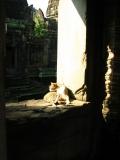 Как украсть месяц лета у зимы. Камбоджа-2013.