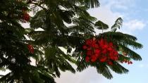 Мой душевный остров Тенерифе. Вторая половина ноября 2013