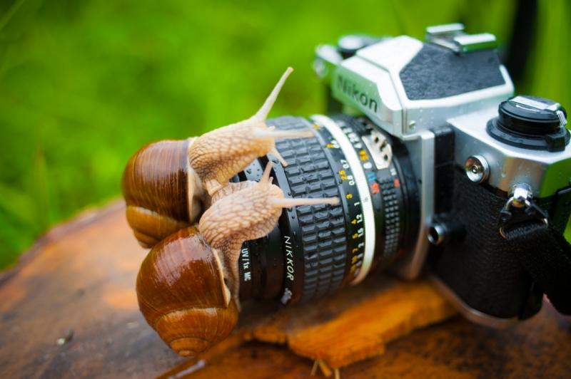 лучший сайт фотографов любителей праздником люди