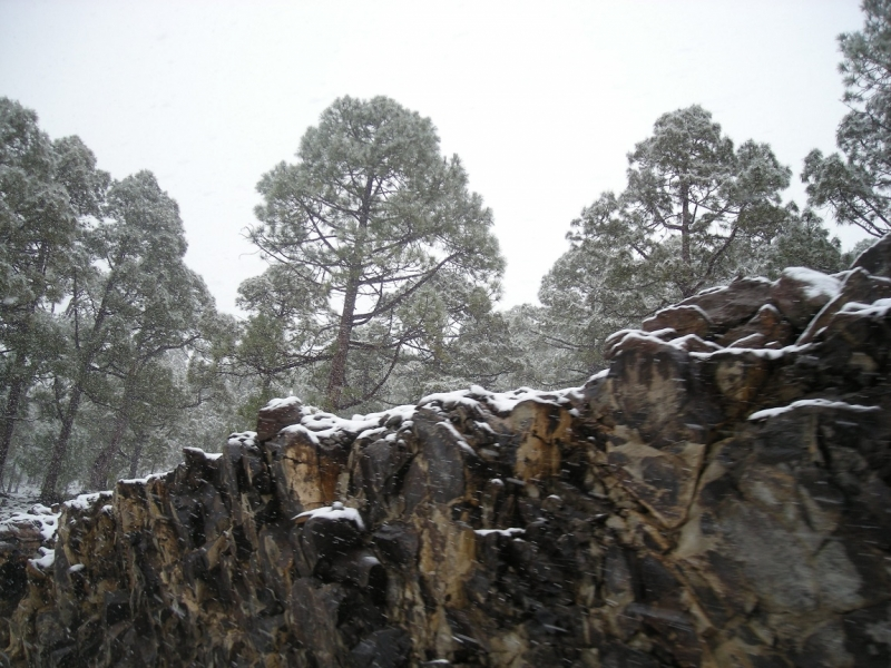 """Снегопад на """"острове вечной весны"""". Тенерифе, январь 2014. Фотографии вулкана в снегу."""