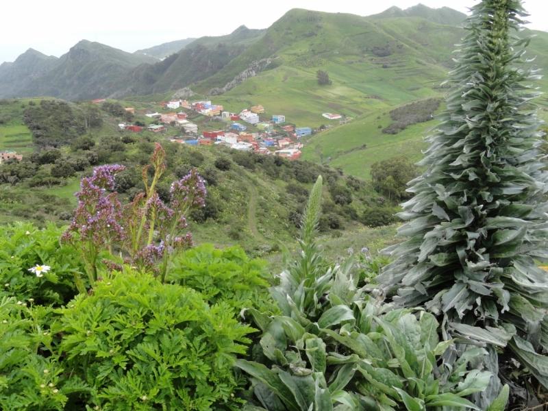Тенерифе: 8 дней снега, моря и пальм