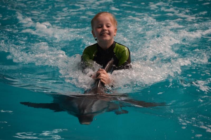 Поплавать с дельфинами в Стамбуле?