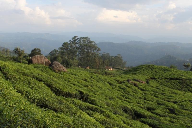 Индия 2011 - Махараштра и Керала