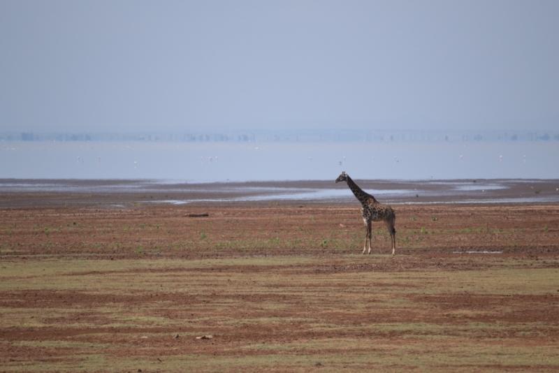 Дар, Занзибар, Нгоронгоро, озеро Маньяра (июнь 2014) - отчет+добавлены фотографии