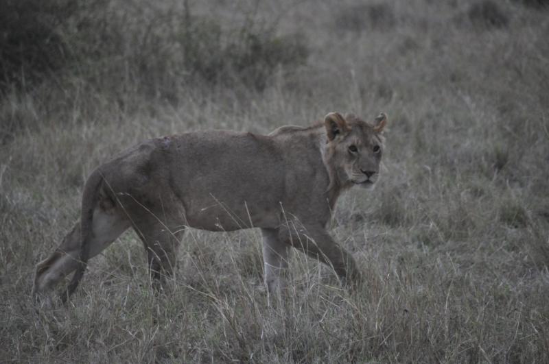 Кения, Миграция, Август 2014 г