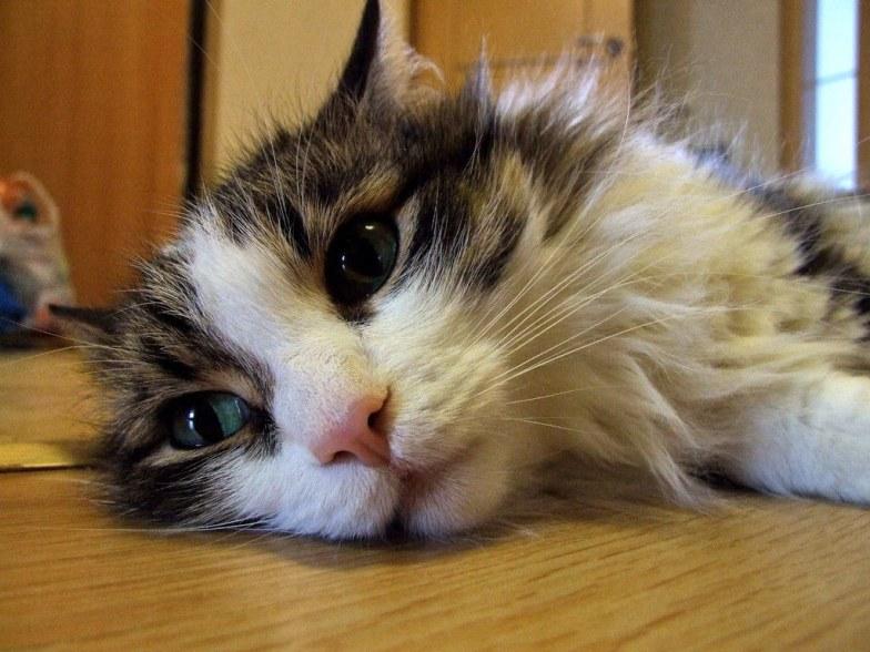 Куда пристроить кота москва