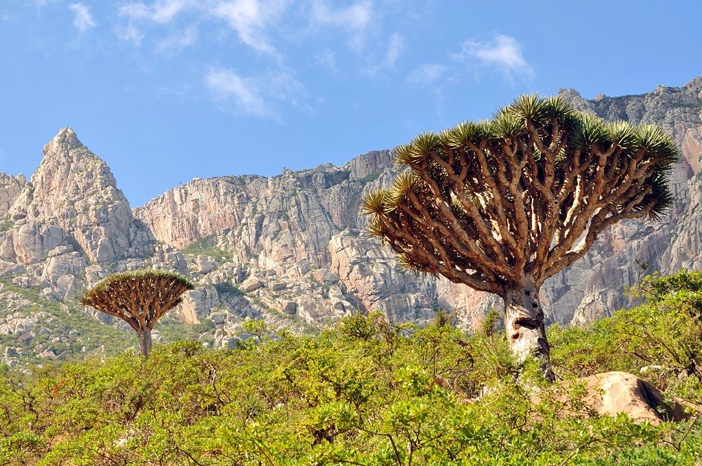 сокотра остров фото настроению растения можно