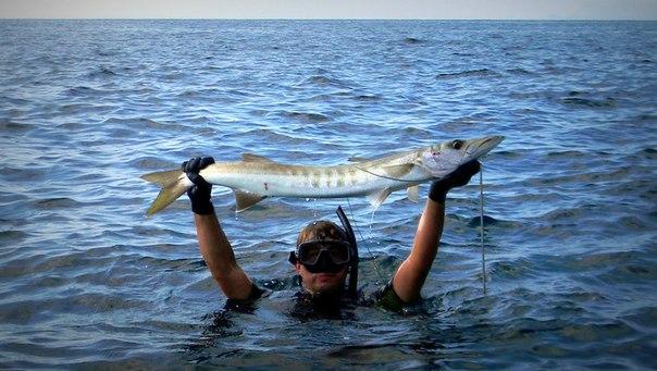 Подводная охота тайланде самуи форум путешествиях тайланд