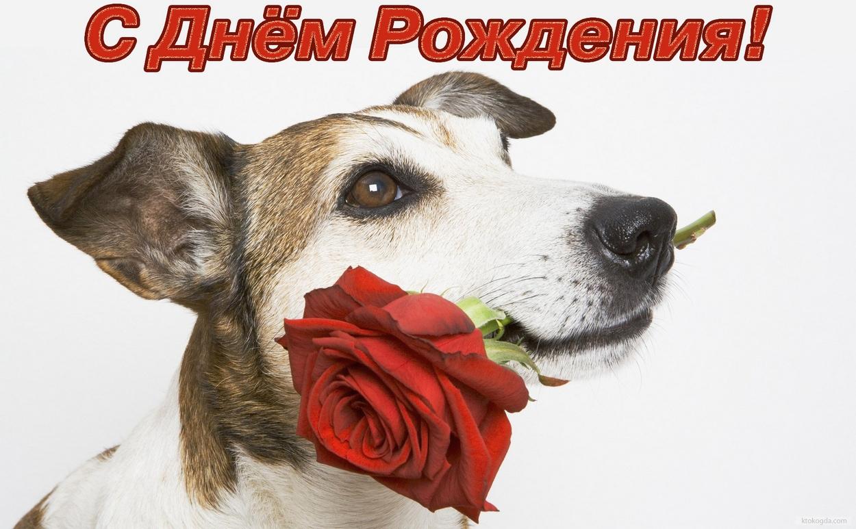 собаки картинки с днем рождения