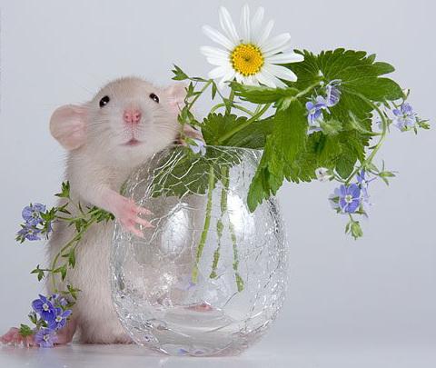 Картинка с мышкой поздравление, открытки днем рождения