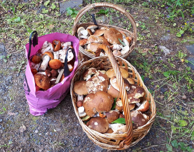 Фото сбора грибов барнаул поговорим