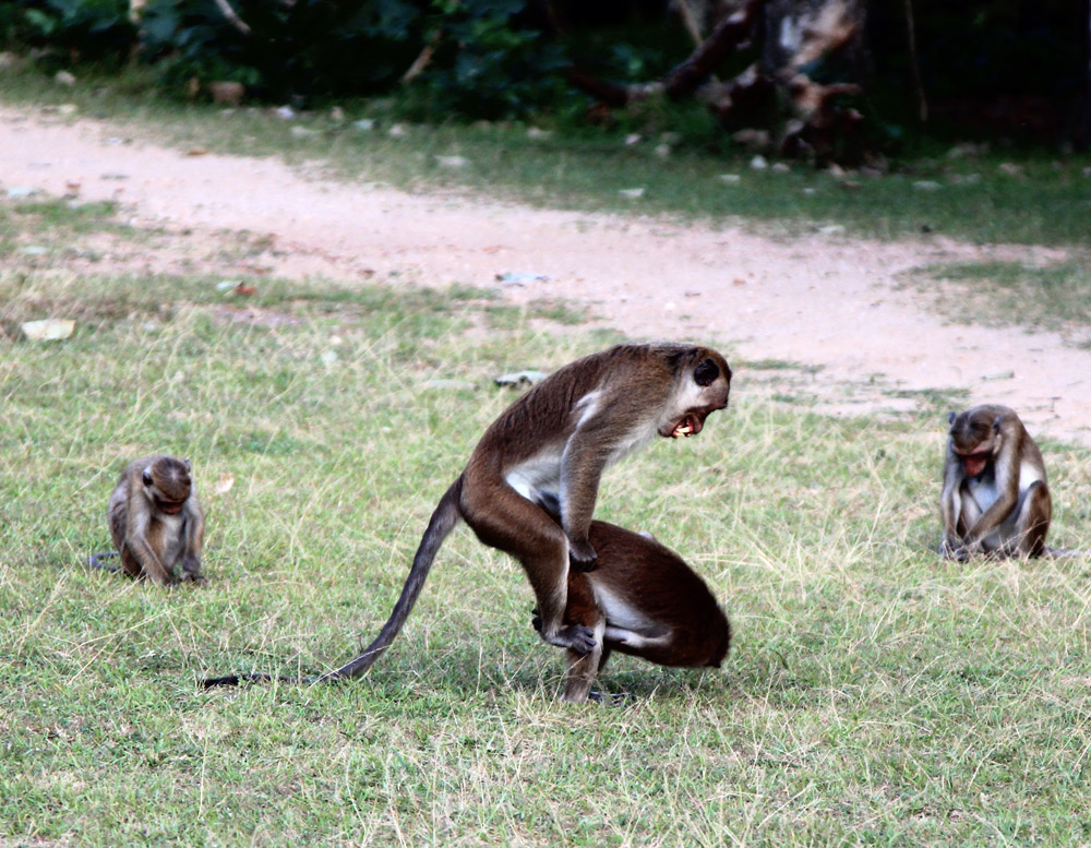 самостоятельно в Шри Ланку