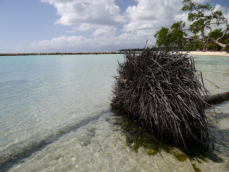 Гваделупа остров в Карибском мореИзображение