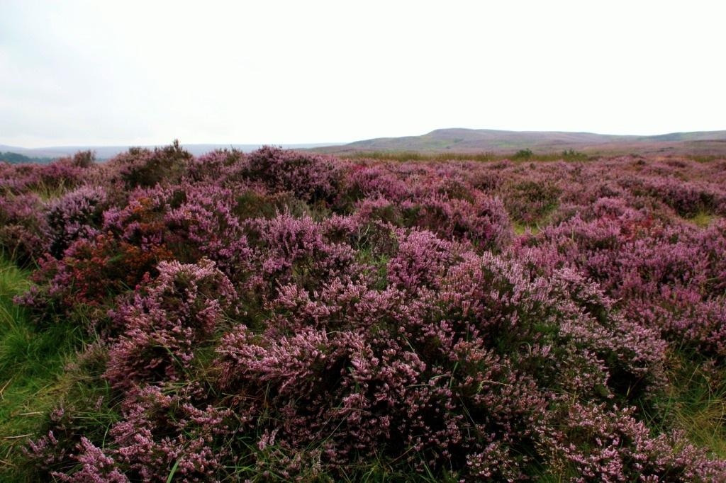 Уитби и вересковые поля Йоркшир