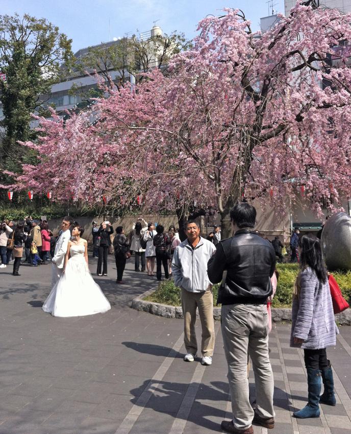 путешествие в японию самостоятельно