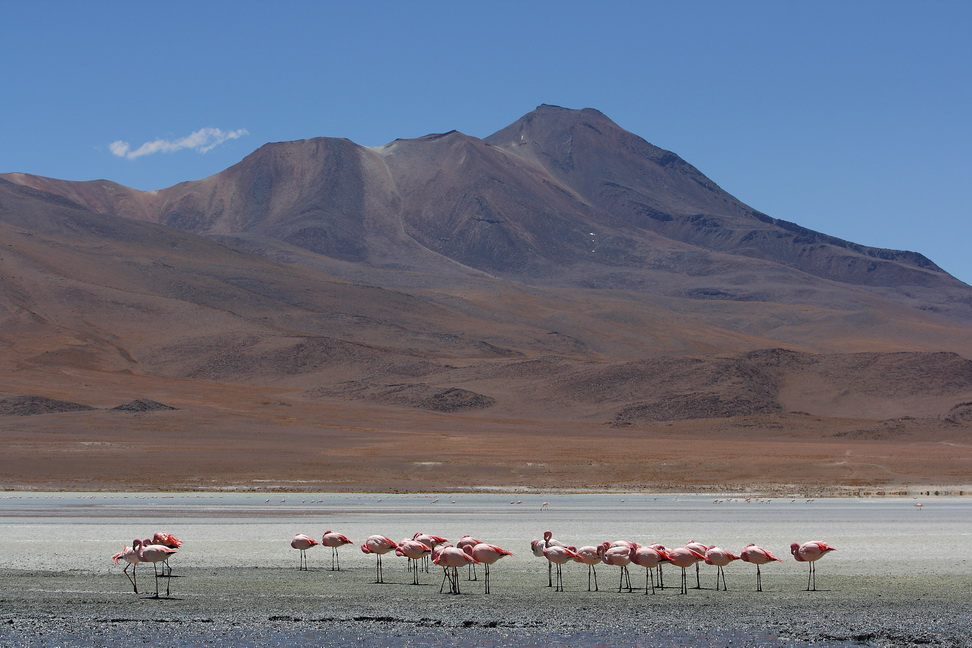 Кругосветка за 8 месяцев. Перу, Боливия, Перу, Эквадор