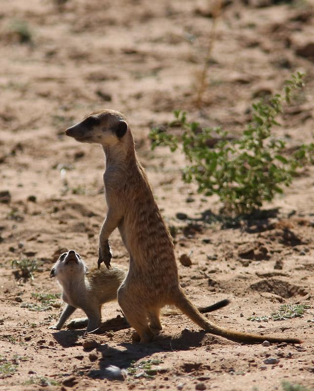 Ботсвана на джипе: парк Чоб и дельта Окаванго