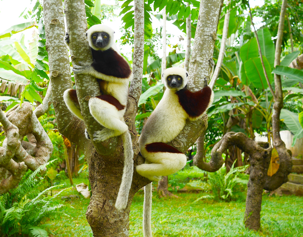features of the island of madagascar Madagascar is located off the eastern coast of southern africa in the indian ocean along the mozambique channel it is the fourth largest island in the world with a landmass of 226,498 square miles (586,889 square kilometers) which includes its offshore islands it is one thousand miles long (1,609 kilometers).