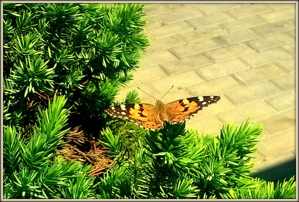 профессор едет на суматру ловить бабочек