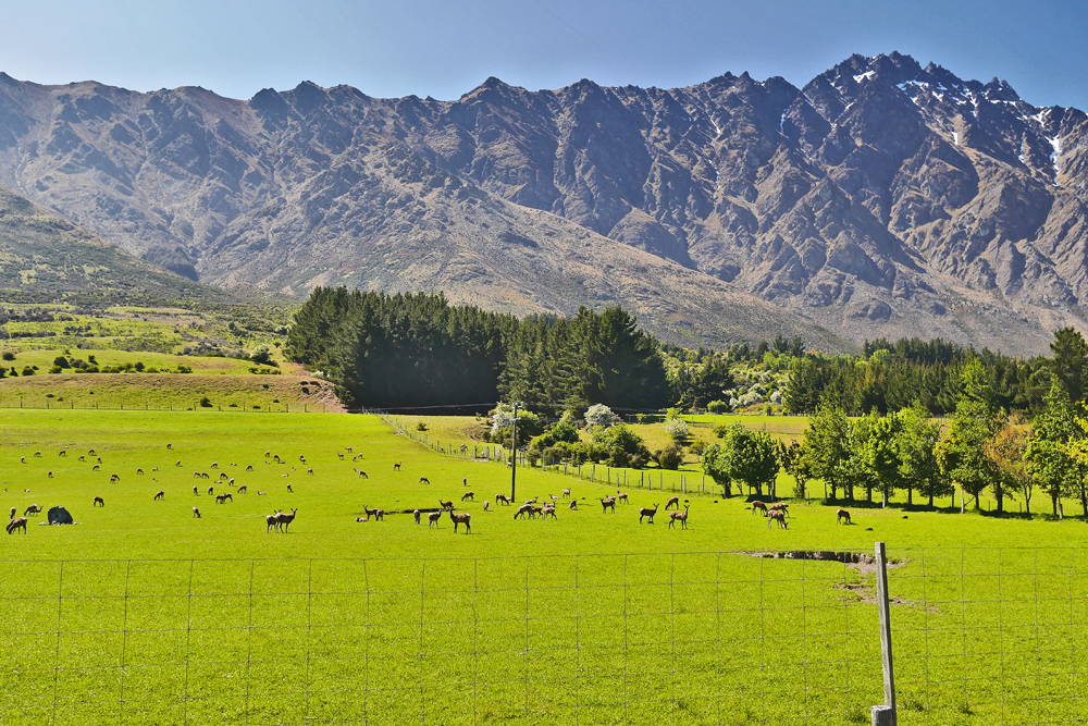 Путешествие по Новой Зеландии отзывы и что посмотреть