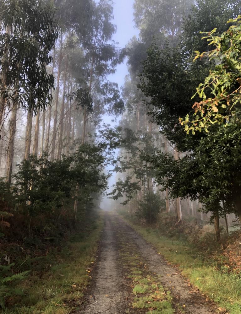 Осенний Камино де Сантьяго. Camino Inglés. Сентябрь 2021