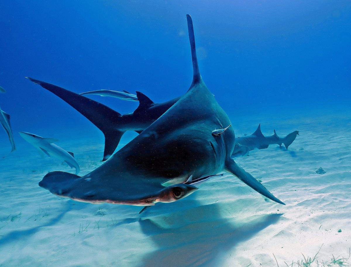 акулы всех видов картинки кто желает увеличить