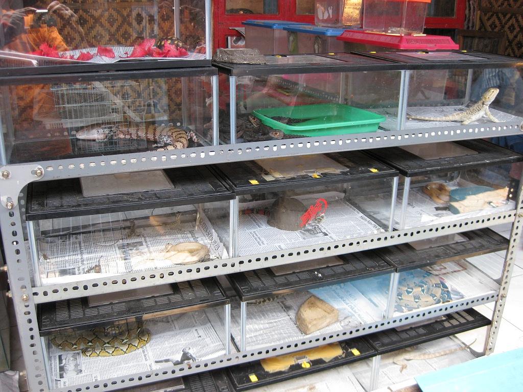 птичий рынок магазин для рыбалки